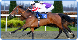 Horse Racing betting on Betdaq picture