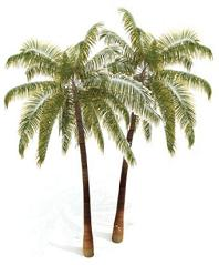 Games site with palms
